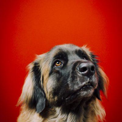 Ebbi, Bettinas Hund bringt nichts aus der Ruhe